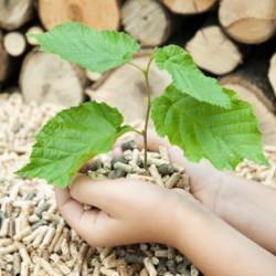 Holzpellets sind im Oktober bis zu 17 Prozent günstiger als Heizöl